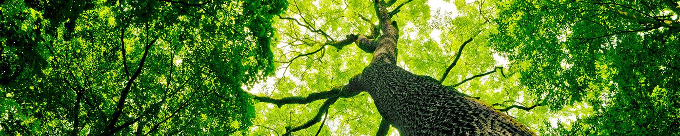 Zrównoważony rozwój i ochrona środowiska to priorytety CREATON Polska