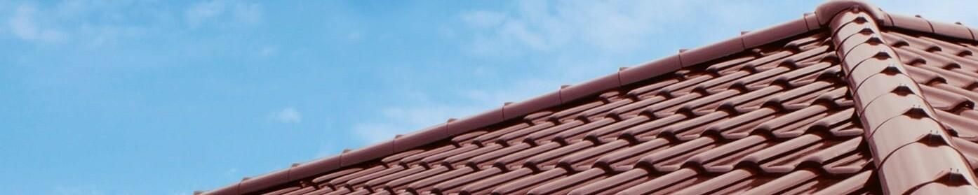 Mech na dachu – jak zapobiegać i jak sobie z nim radzić?